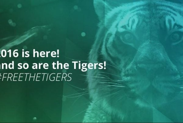 Free The Tigers: Download our Free Tiger Animation Rig